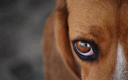 No Brasil:Animais maltratados podem ser resgatados em domicílios sem mandado judicial