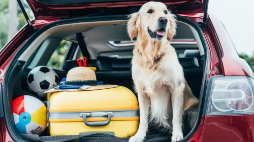Confira as regras para levar seu animal de estimação para viajar