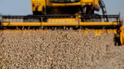 Agricultura:Produção de grãos deve ser recorde no País em 2019