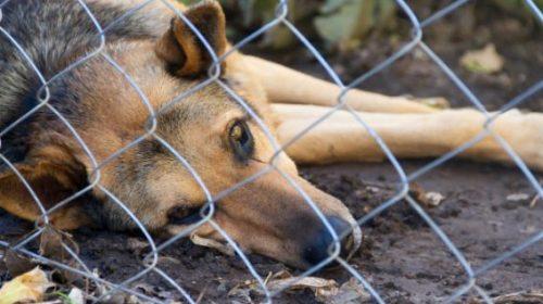 País tem 3,9 milhões de animais em condição de vulnerabilidade
