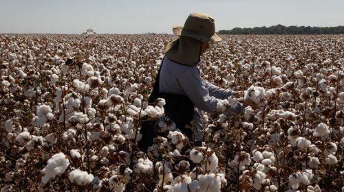 Agricultura:Brasil deve fechar safra 2018/2019 com recorde de 242,1 milhões de toneladas de grãos