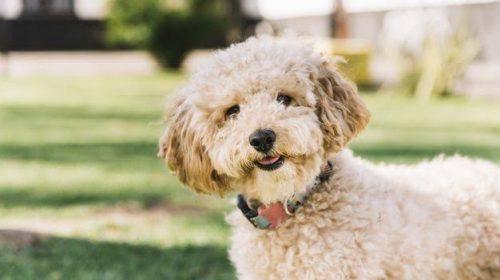 Saúde de cães e gatos: prevenção é a melhor ação contra vermes